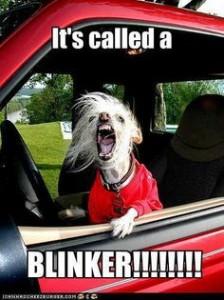 a blinker peeve